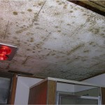 Mold Facts